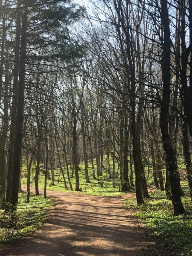 chemin de trail qui se sépare en deux