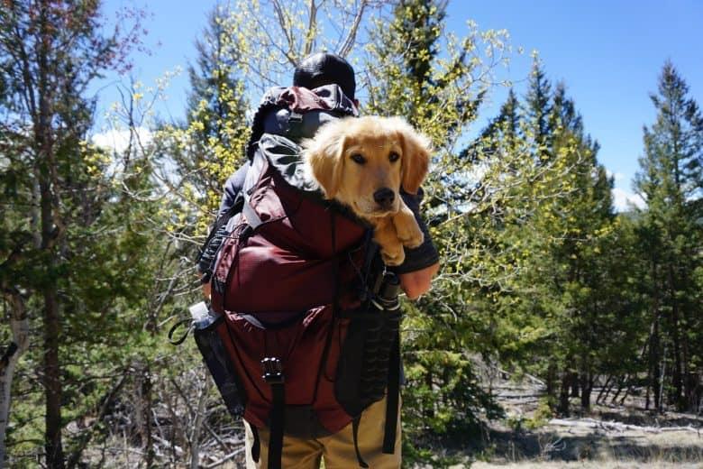 homme portant un chien dans sac à dos randonnée 60L