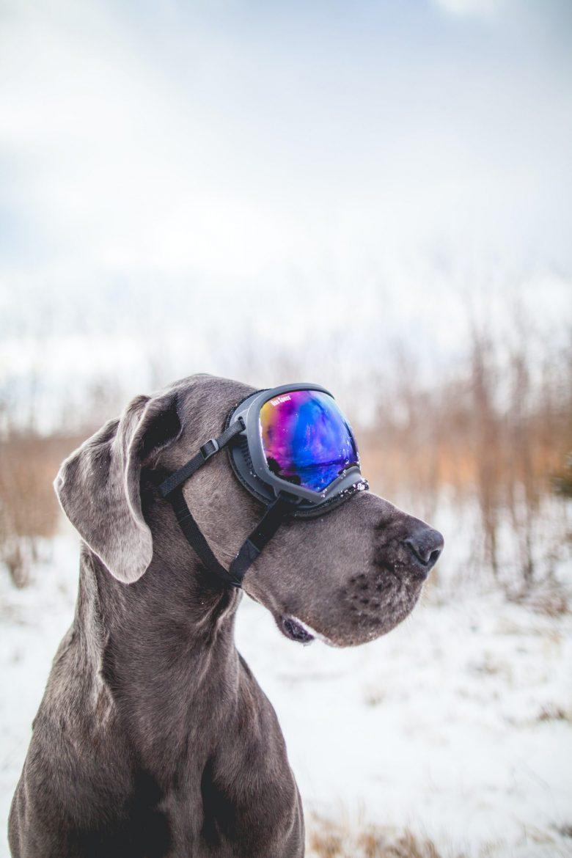 Un chien portant un masque de ski
